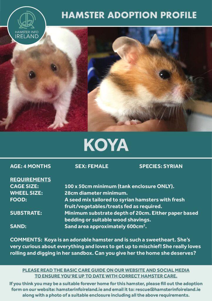 Koya Profile